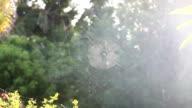 Cobweb & Trees in the Sun. Backlit detail nature shot video