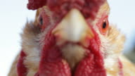 Cock close up video