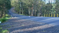 Cockatoo crossing the road video