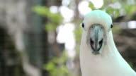 Cockatoo video