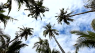 Coconut and sky video