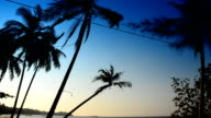 Coconut at beach and blue sky video