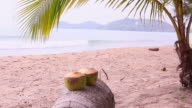 Coconut drink on the beach background video