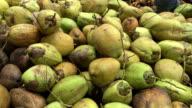 Coconut Industry in Sri Lanka video