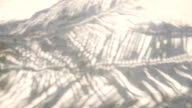 Coconut leaf shadow on the sand video