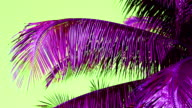 coconut leaf trees blowing in the wind, copy space, odd color purple leaf green sky video