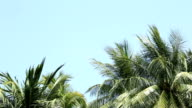coconut leaf trees blowing in the wind over blue sky, copy space video