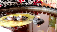 Coconut oil lamp and joss sticks burning at Thai temple ,Bangkok video
