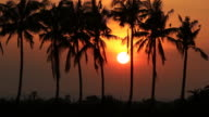 Coconut palm tree and sunset video