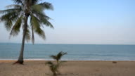 Coconut palm tree on the beach and sea video