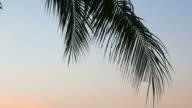 HD Coconut palm tree on the beach video