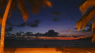 Coconut palm tree video