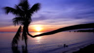 Coconut palm tree with sunset background. video