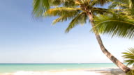 coconut palm trees on beach video
