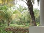 Coconut Palms in the rain video