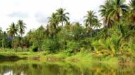 Coconut palms near the lake, Koh Chang island, Thailand video