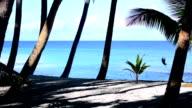 Coconut palms on the beach video