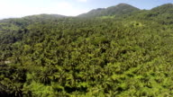 Coconut plantations aerial view from a drone video