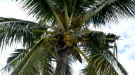 Coconut tree and blue sky with clouds video