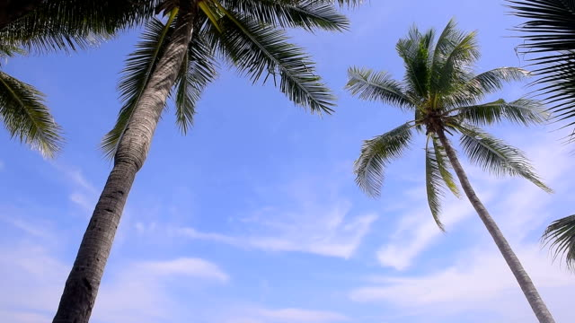 coconut tree and sky video