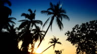 Coconut tree at beach and sunset video