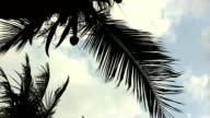 Coconut Tree Fronds Against Cloudy Sky From Below video