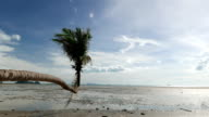 Coconut tree on the beach when low tide. video