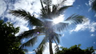 Coconut tree under blue sky and bright sun video