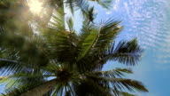 Coconut tree under blue sky video