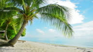 coconut tree video