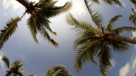 Coconut tree with blue sky in fish eye view video