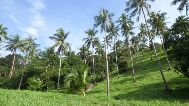 Coconut Trees - koh tao video