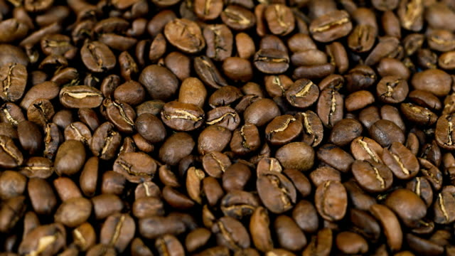 Coffee beans Nicaragua Maragogype video