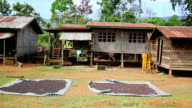 Coffee drying at home, Laos video