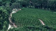 Coffee Plantation South Of Belo Horizonte  - Aerial View - Minas Gerais, Ritápolis, Brazil video