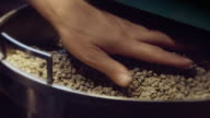 Coffee Roaster Checking Raw Beans video