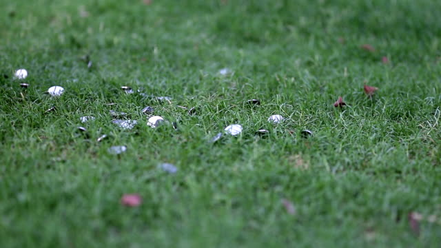 Coins falling on grass surface video