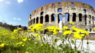 Coliseum at summer in Rome video