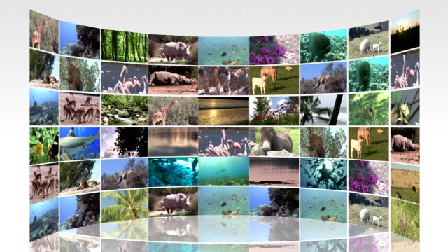 Collage of animals video