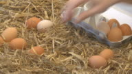 collecting eggs video