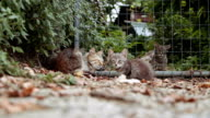 colony of stray cats - cat video