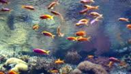 Colorful aquarium, colorful fishes swimming video