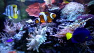 Colorful Aquarium Fish video