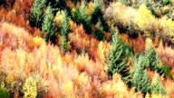Colorful autumn forest at arrow town, new zealand video