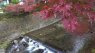 Colorful Autumn Leaf and River in korankei, Japan. video