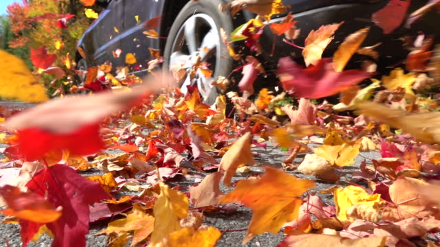 SLOW MOTION CLOSE UP: Colorful autumn leaves flying behind a car driving over video