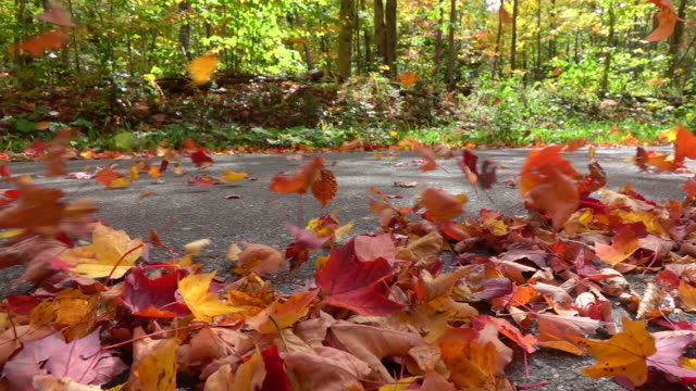 SLOW MOTION: Colorful autumn leaves swirling behind a car driving on forest road video