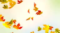 Colorful Autumn video