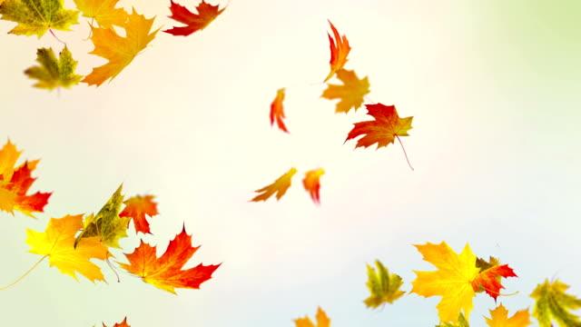 Colorful Autumn video