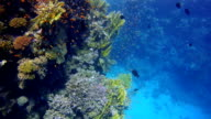 Colorful Coral reef with lot of fisch in Slow Motion video